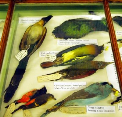Various birds
