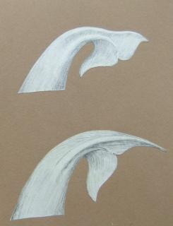 Tail flukes